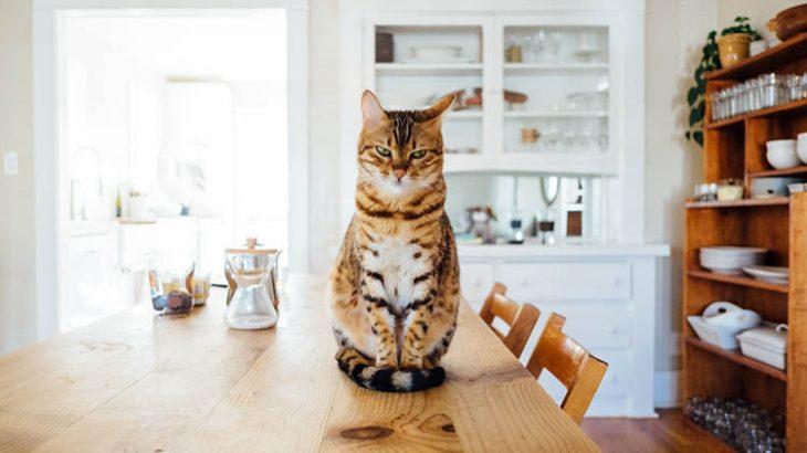 【2020年版】ドイツで人気の猫の名前ランキングTOP10!ペットの名前最新トレンドを在住者が紹介