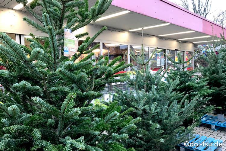 クリスマスツリーがドイツのホームセンターで売られている様子