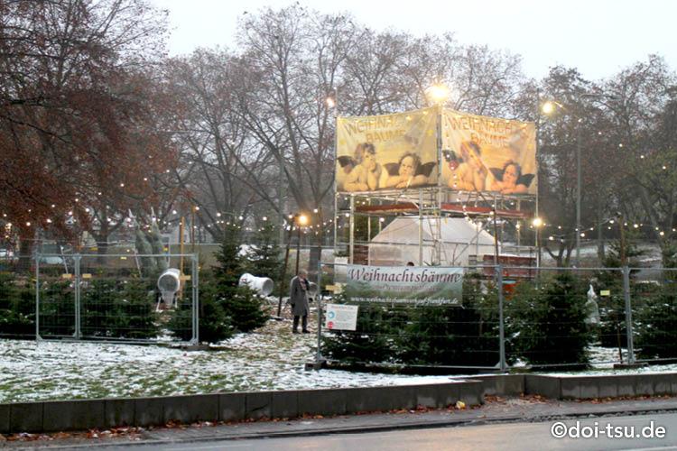 ドイツのクリスマスツリー生木売り場