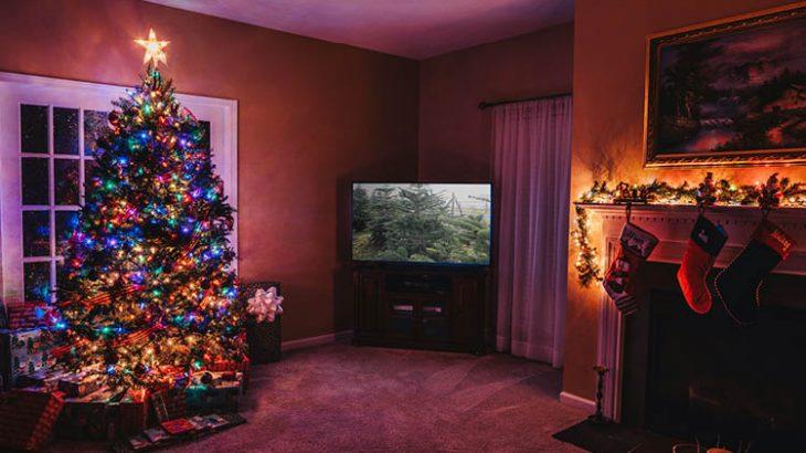 【ドイツ発祥】クリスマスツリーを飾ろう!もみの木の種類・入手方法などドイツのクリスマスツリーを在住者が紹介