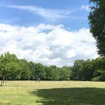 【フランクフルトの公園・動物園】在住者おすすめの自然スポットで癒されよう!